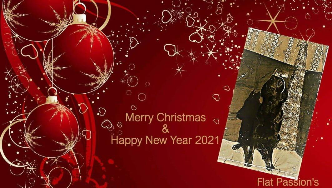 Zalig Kerstfeest 🎄🎅🎄 en gelukkig Nieuwjaar 2021🎆